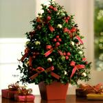 Reference # T134-1A Starting at $ 79.99 Deck the halls - and tables, and mantles, and foyers - with this charming tabletop Christmas tree! Elegant English boxwood stems are hand arranged to look like a mini Christmas tree, complete with all the festive  trimmings.