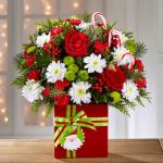 Reference #16-C2 Starting at $44.95 Rich red roses, red mini carnations, white chrysanthemums, green button poms, variegated holly, and an assortment of holiday greens are artistically arranged to blossom from a stylish red rectangular ceramic vase tied festive ribbon with Candy Canes included.
