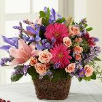 Reference # C3-5159 Starting at $ 54.95 Designed with an eye for detail, this bouquet blossoms with burgundy gerbera daisies, pink Asiatic Lilies, pink spray roses, blue iris, lavender stattice, and lavender monte casino asters,